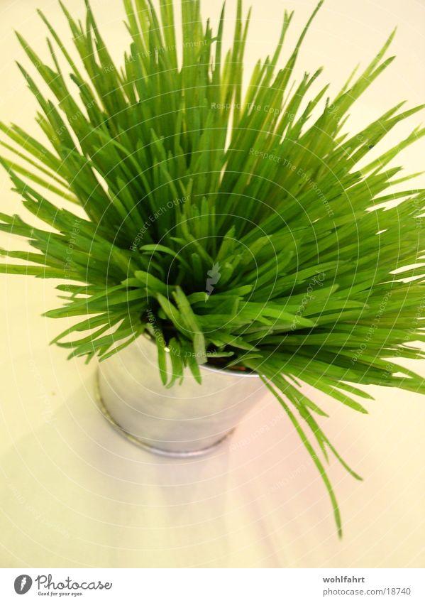 Das grüne Etwas grün obskur Topf Kunstblume