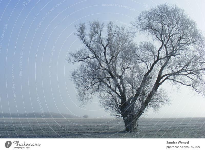 Eisbaum Umwelt Natur Landschaft Pflanze Erde Wolkenloser Himmel Horizont Winter Klima Klimawandel Wetter Schönes Wetter Nebel Frost Baum Feld Hoffnung ruhig