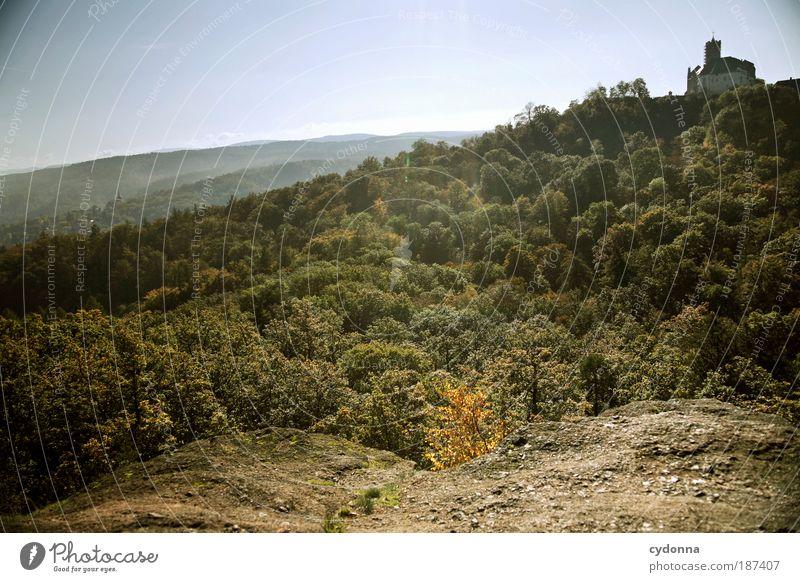 Luftlinie Leben Wohlgefühl Erholung ruhig Tourismus Ferne Freiheit Sightseeing Umwelt Natur Landschaft Wolkenloser Himmel Baum Wald Felsen Bildung einzigartig