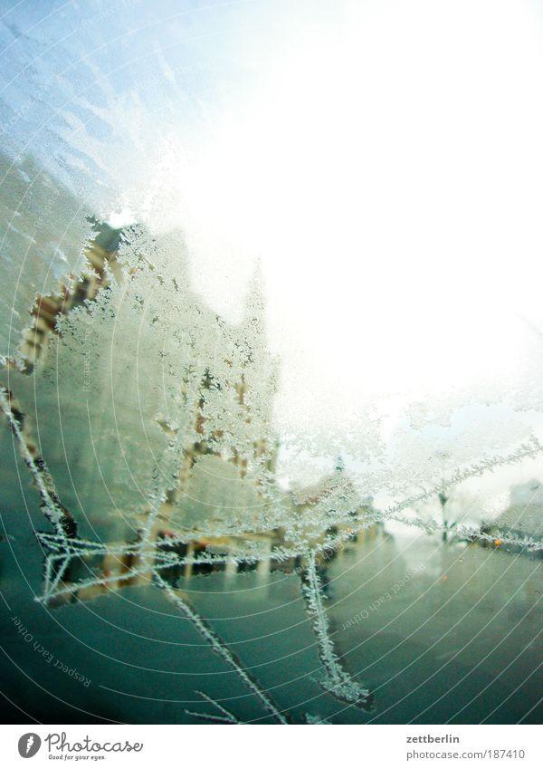 Klimakrise Winter kalt PKW Wärme Eis Glas Frost durchsichtig Fensterscheibe Autofenster Riss Scheibe Kristallstrukturen Kristalle Eiskristall Eisblumen
