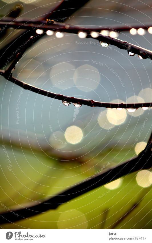 Danach..... Umwelt Natur Wassertropfen Sonnenlicht Wetter Regen Baum frisch glänzend nass natürlich blau grün ruhig jarts Farbfoto Außenaufnahme Nahaufnahme
