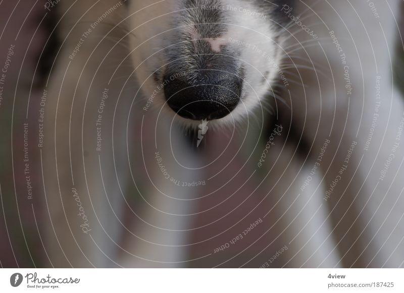 Kalte Schnauze Tier Hund Tiergesicht Sinnesorgane Fell Farbfoto Außenaufnahme Nahaufnahme Textfreiraum unten Bewegungsunschärfe Totale Nase Tag