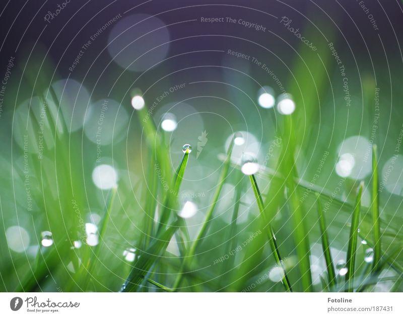 Gefunkel Umwelt Natur Landschaft Pflanze Urelemente Luft Wasser Wassertropfen Frühling Sommer Klima Wetter Schönes Wetter Gras Wiese Coolness hell kalt nass