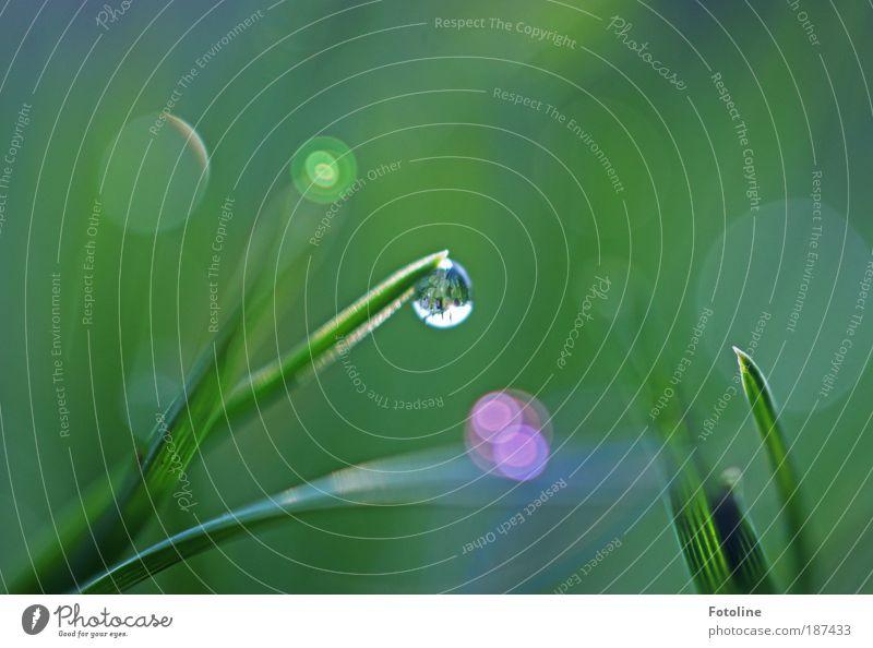 Reich der Feen Umwelt Natur Landschaft Pflanze Urelemente Luft Wasser Wassertropfen Frühling Sommer Herbst Klima Wetter Schönes Wetter Gras Park Wiese Coolness