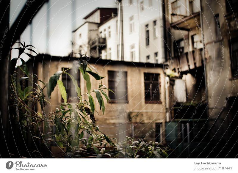 hinterhofidylle Wohnung Haus Renovieren Pflanze Wildpflanze Stadt Menschenleer Hochhaus Gebäude Fassade Balkon Zaun alt bedrohlich Verzweiflung Frustration