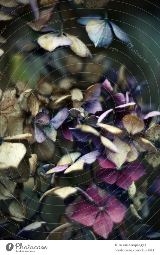 aus und vorbei. Natur alt blau Pflanze Einsamkeit dunkel kalt Umwelt Traurigkeit Herbst natürlich Park wild Sträucher Vergänglichkeit Wandel & Veränderung