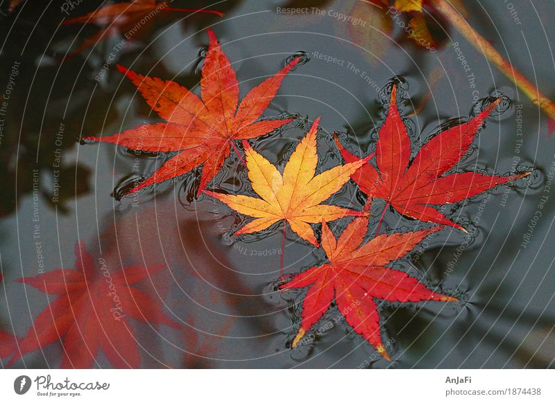 Oberflächenspannung Natur schön rot Blatt gelb Herbst ästhetisch Vergänglichkeit Wandel & Veränderung Freundlichkeit