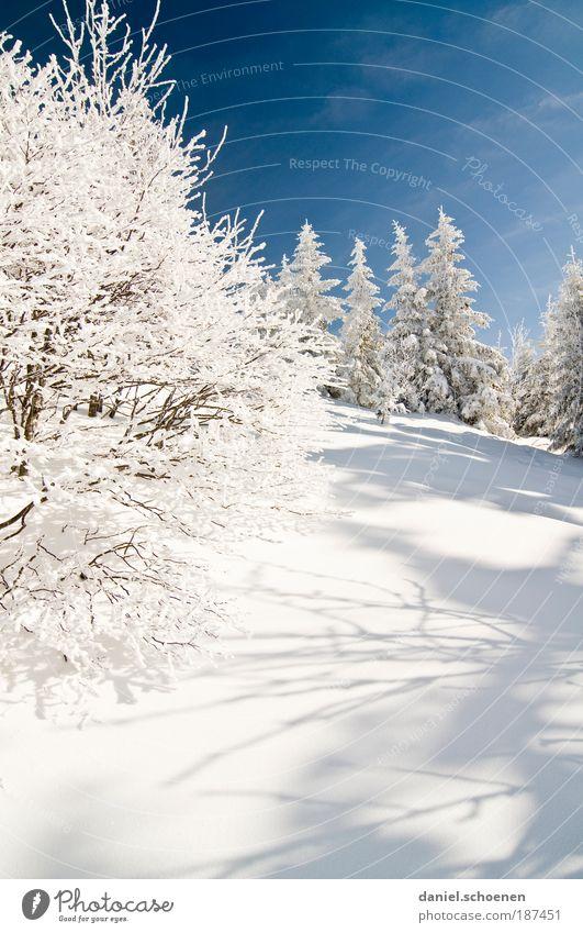 Winterspaziergang Umwelt Natur Landschaft Himmel Wolkenloser Himmel Schönes Wetter Eis Frost Schnee Baum blau weiß Wintersonne Licht Schatten Sonnenlicht
