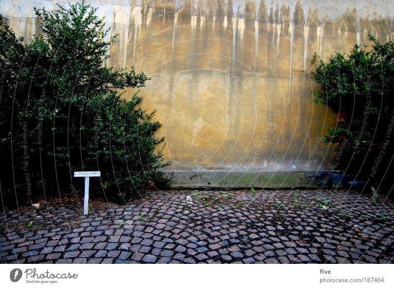 Direktør Stadt alt Pflanze Baum gelb Wand Mauer Schilder & Markierungen Boden Pflastersteine Parkplatz Hafenstadt Dänemark Kopenhagen