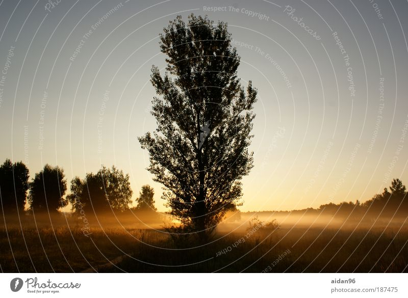 Präriemorgen Natur Pflanze Himmel Wolkenloser Himmel Sonnenaufgang Sonnenuntergang Sommer Schönes Wetter Baum Feld Stimmung Vorfreude Mut Warmherzigkeit ruhig
