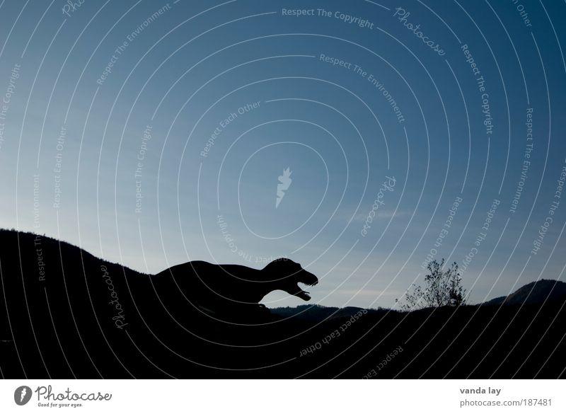 Auf der Pirsch Umwelt Himmel Jagd Aggression blau Angst Entsetzen Todesangst Dinosaurier ausgestorben Tyrannosaurus rex jurrasic Tier Horizont Jäger bedrohlich