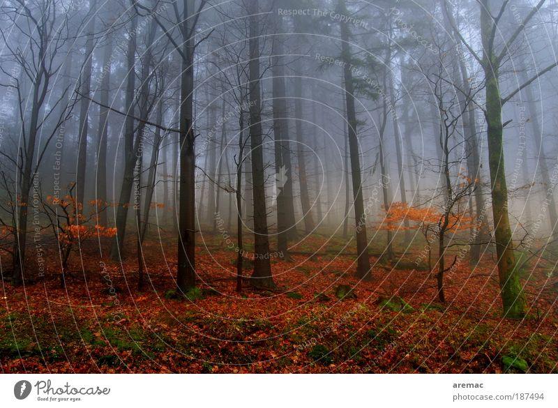 Nebulös Natur Baum Pflanze rot ruhig Wald kalt Herbst Landschaft Stimmung Nebel Erde Dämmerung mehrfarbig schlechtes Wetter