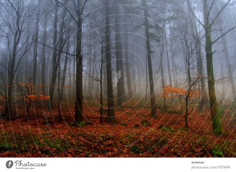 Nebulös Natur Landschaft Pflanze Erde Herbst schlechtes Wetter Nebel Baum Wald kalt rot Stimmung ruhig Farbfoto mehrfarbig Außenaufnahme Menschenleer Tag Abend