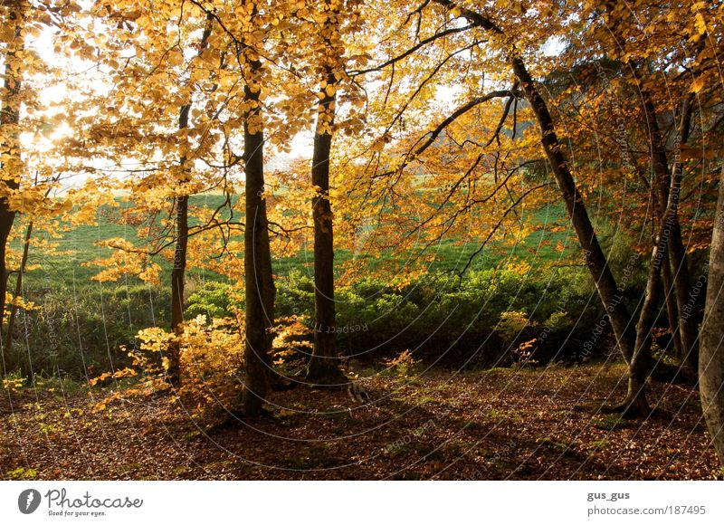 Baumkante im Herbst Umwelt Natur Schönes Wetter Gras Blatt Wald braun gelb gold grün weiß Farbfoto mehrfarbig Außenaufnahme Menschenleer Tag Licht Schatten