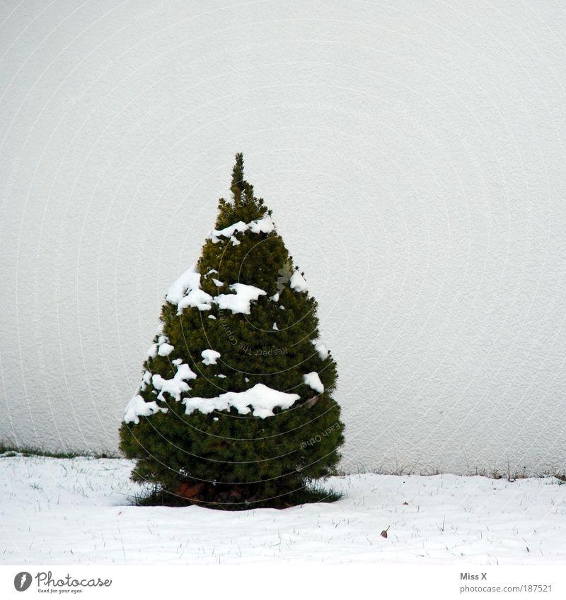 Frohe Weihnacht :-) Winter Schnee Häusliches Leben Natur Eis Frost Baum kalt klein Weihnachtsbaum Farbfoto Gedeckte Farben Außenaufnahme Menschenleer