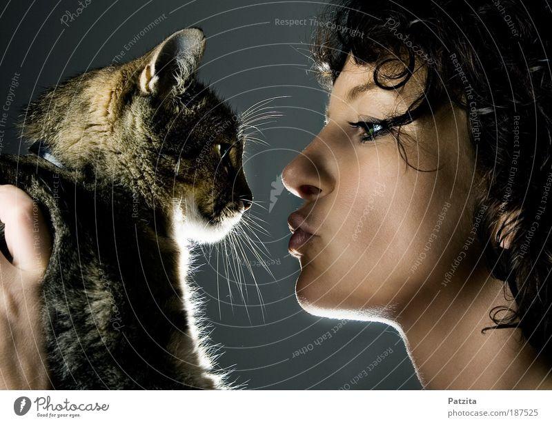 loving the animal Mensch Jugendliche schön Gesicht Liebe schwarz Frau Tier Porträt feminin Glück grau Katze Zufriedenheit Zusammensein Erwachsene