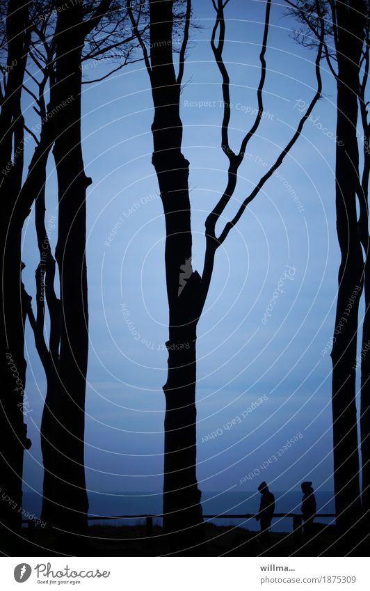 dreisam Baum hochstämmig Buche Küste Ostsee Meer Nienhagen Gespensterwald blau schwarz Silhouette Spaziergang Menschengruppe Kapuze Dämmerung Naturschutzgebiet