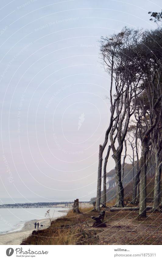 leerstelle Mensch Baum Erholung Strand Küste Paar Spaziergang Ostsee Buhne Buche Parkbank Strandspaziergang Buchenwald Ausflugsziel Nienhagen Gespensterwald