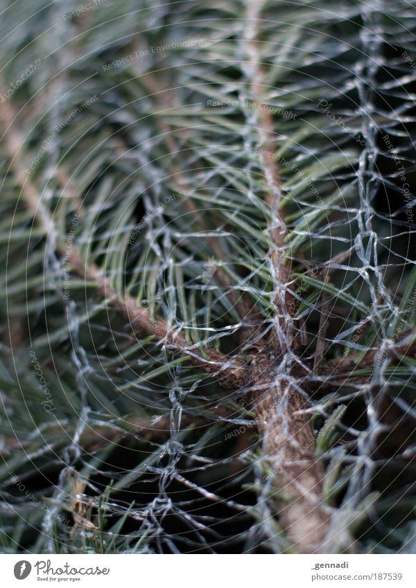 Hol mich hier raus Tannenzweig Weihnachten & Advent Weihnachtsbaum grün Netz Farbfoto Außenaufnahme Menschenleer Tag