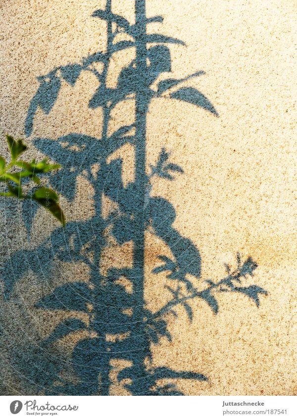 Wunderschöne Festtage euch allen Umwelt Natur Pflanze Blume Sträucher Rose Blatt Park Mauer Wand Fassade Blühend träumen verblüht Wachstum stachelig Kraft
