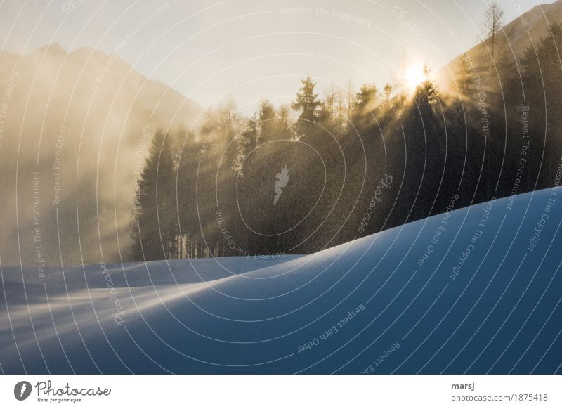 Ja, der Winter... Natur Ferien & Urlaub & Reisen Erholung ruhig Winter Wald Berge u. Gebirge kalt Beleuchtung Schnee außergewöhnlich Tourismus leuchten Zufriedenheit Eis Ausflug