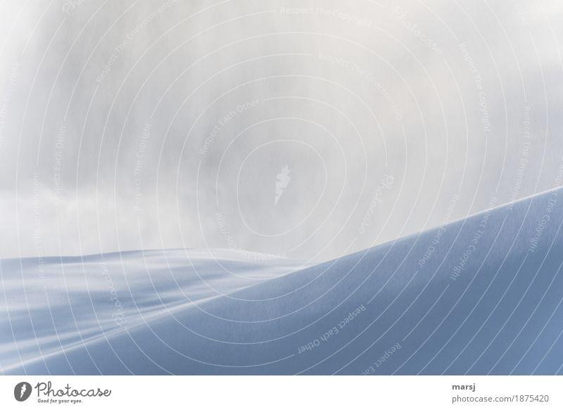Whiteout Natur Landschaft Winter kalt Schnee Schneefall Nebel Eis authentisch Frost sanft minimalistisch Reinheit geschwungen Schneesturm Schneehügel