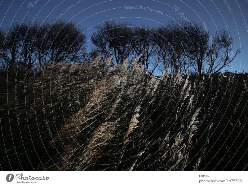 Bewegte Zeiten Umwelt Natur Landschaft Himmel Schönes Wetter Wind Baum Gras Wald Küste Bewegung natürlich schön wild Begeisterung Kraft Leidenschaft