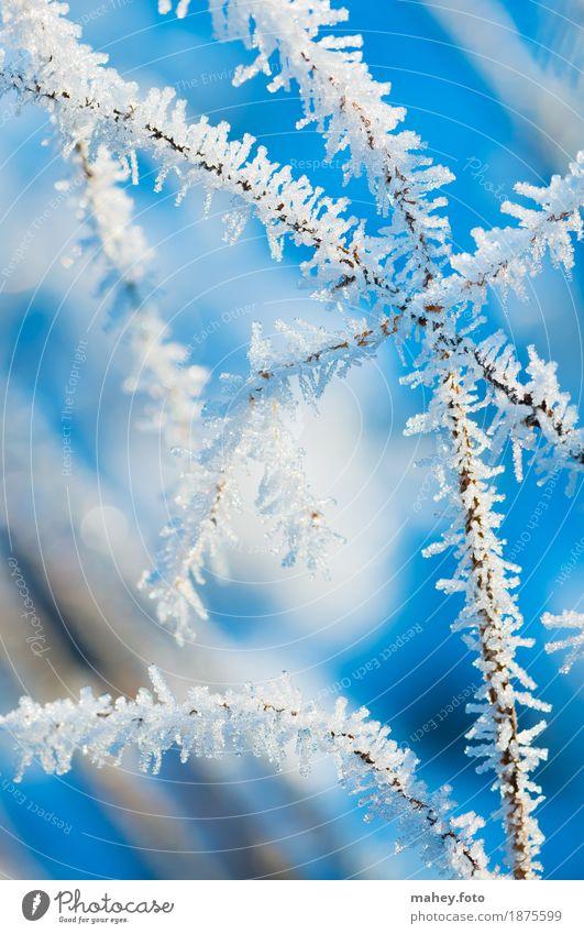 Eisblume Weihnachten & Advent Natur Winter Frost Gras Garten frieren kalt Spitze blau weiß Eisblumen Eiskristall Hintergrundbild Kreuzung Kälteeinbruch
