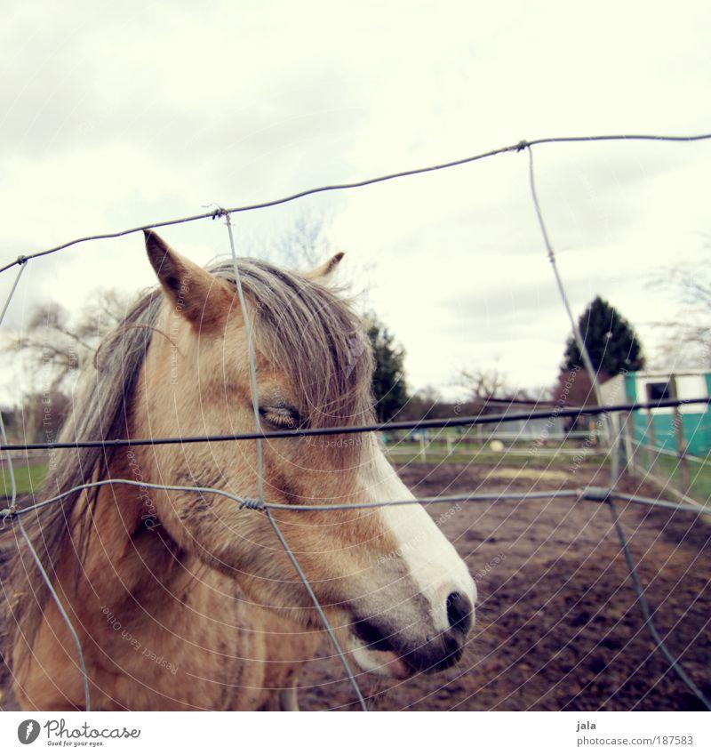 Einsam. ruhig Einsamkeit Tier Pferd Tiergesicht Weide Zaun Gefühle Mitgefühl
