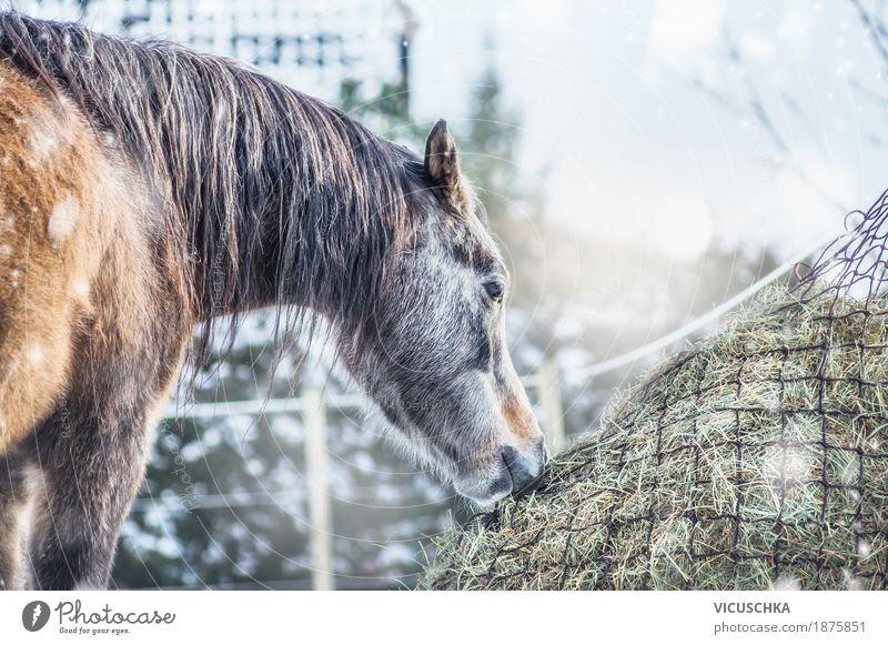 Pferd Winter Heu Design Ferien & Urlaub & Reisen Schnee Natur Schönes Wetter Tier 1 Futter Heunetz Farbfoto Außenaufnahme Textfreiraum oben Tag Gegenlicht