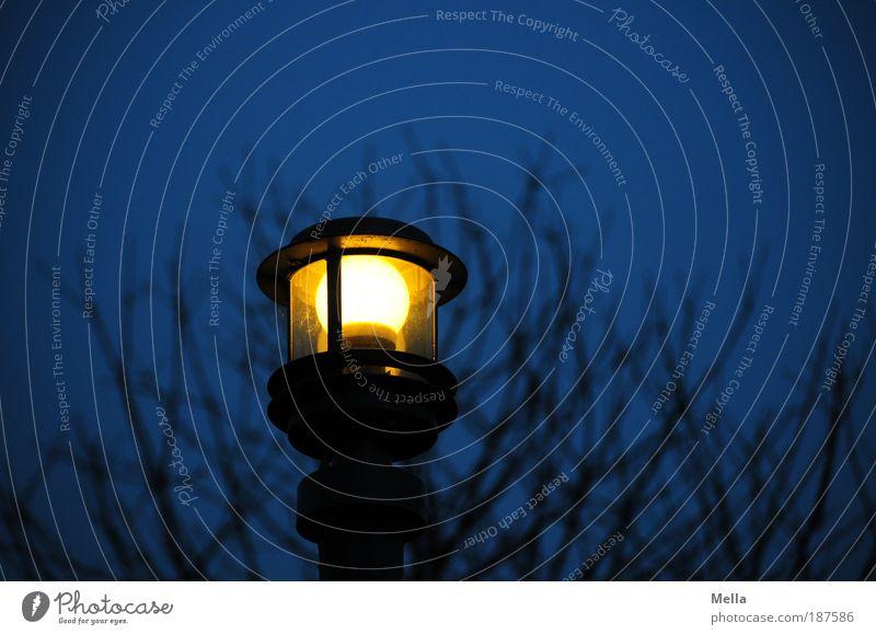 Licht im Dunkeln Natur Baum blau Pflanze Lampe dunkel Umwelt Elektrizität leuchten Laterne Straßenbeleuchtung Glühbirne Umweltschutz