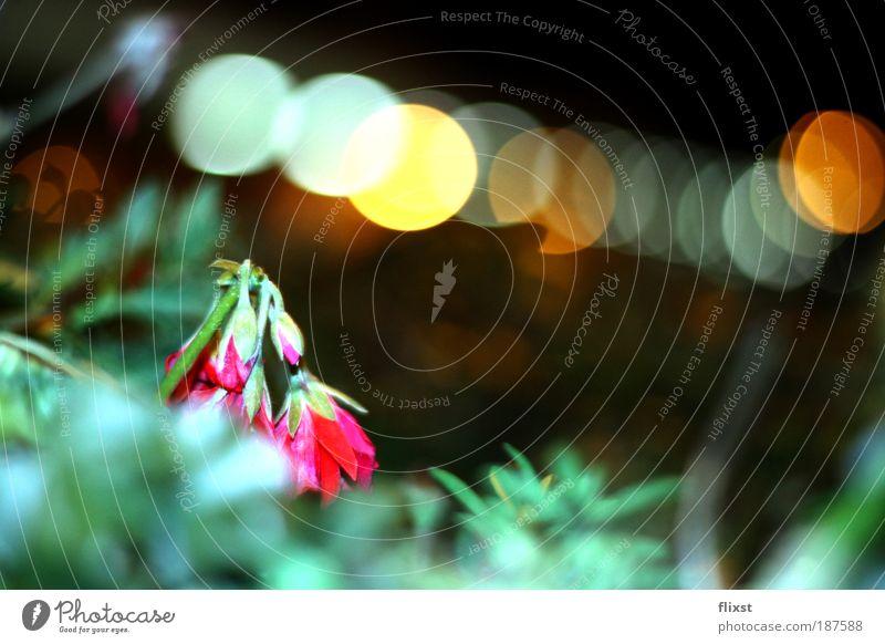 Einzelgänger Blume Pflanze Duft Heilpflanzen Naturwuchs Unkraut