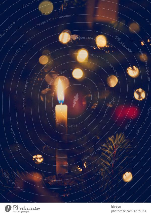 Advent Advent ein .... Weihnachten & Advent Kerzenschein Kerzenflamme Weihnachtsbaum Weihnachtsbeleuchtung glänzend leuchten ästhetisch Freundlichkeit kuschlig