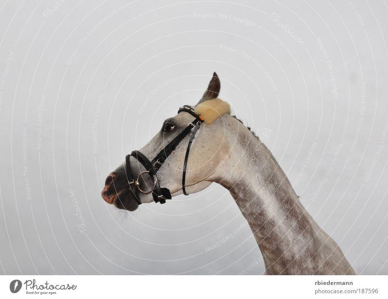 Lustiges Pferd Tier lustig dumm Humor Zaumzeug