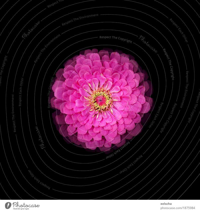 Flower Natur Pflanze Sommer schön Blume rot Blatt schwarz gelb Blüte Liebe Frühling natürlich Kunst außergewöhnlich Garten