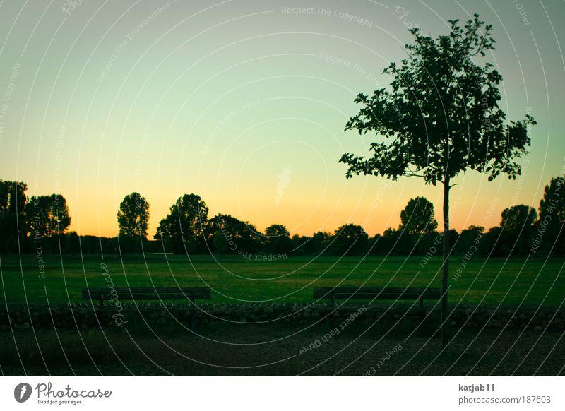 Strange Magic Himmel Natur grün Baum Sommer ruhig gelb Umwelt Landschaft Wiese Gras Stimmung Park Horizont Zufriedenheit Ordnung