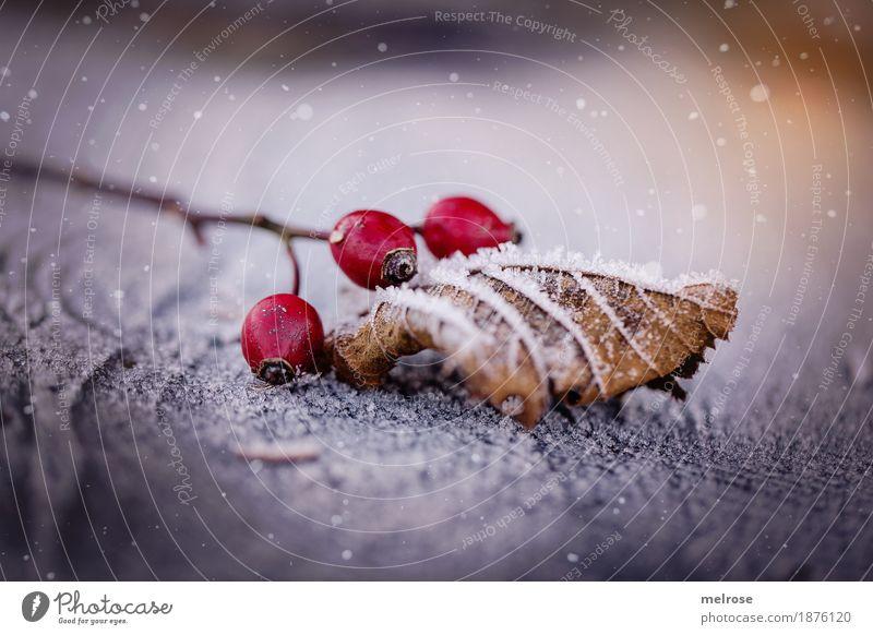 hurra es schneit Natur Sonnenlicht Winter Schönes Wetter Eis Frost Schnee Schneefall Sträucher Blatt Blüte Beeren Hagebutten Frucht Zweige u. Äste Baumstumpf