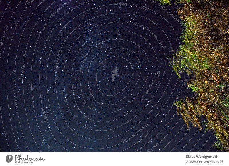 Sommernacht Natur schön Himmel weiß Baum grün blau Sommer Blatt träumen Stern leuchten Schönes Wetter Galaxie Observatorium Milchstrasse