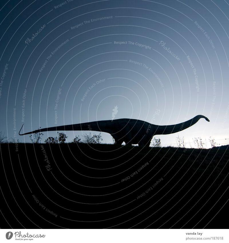 Ungewisse Zukunft Himmel Natur Tier Umwelt Erde groß Urelemente Abend Zukunftsangst Wolkenloser Himmel Ernährung gigantisch Koloss Dinosaurier ausgestorben