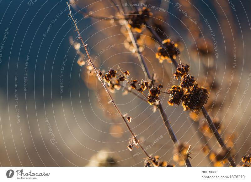 Winterleuchten Umwelt Natur Wassertropfen Himmel Schönes Wetter Pflanze Sträucher Blatt Wildpflanze Zweige u. Äste Wald Unschärfe Lichtspiel Lichteinfall