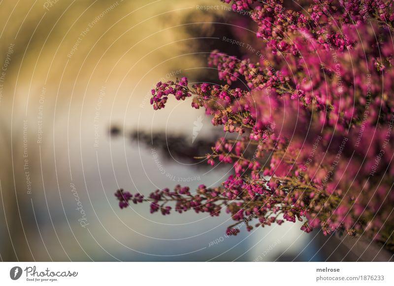 Arnika-RAUSCH Umwelt Natur Sonnenlicht Winter Klima Wetter Schönes Wetter Pflanze Blume Blüte Wildpflanze Park Farbfleck Farbe Lichtblick Lichtspiel Blühend