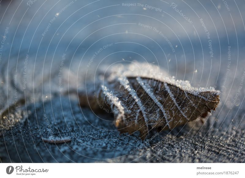 Blatt mit Frost angezuckert Natur Wasser Wassertropfen Sonne Winter Klima Schönes Wetter Eis Schnee Baumstumpf Wald Väterchen Frost Eiskristall Lichtschein