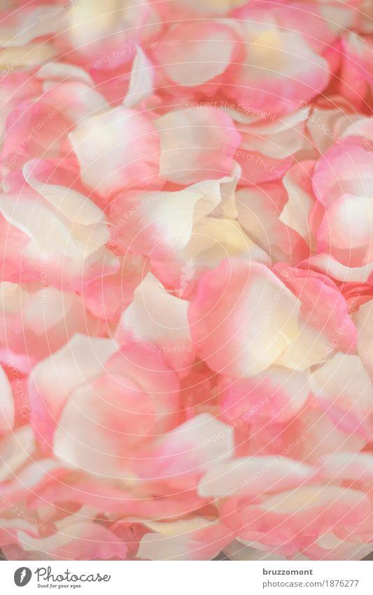 Welken Körperpflege Spa Pflanze Blume alt Duft verblüht ästhetisch schön rosa Verliebtheit Romantik Rose Rosenblätter Blütenblatt Hochzeit Brautjungfer welk