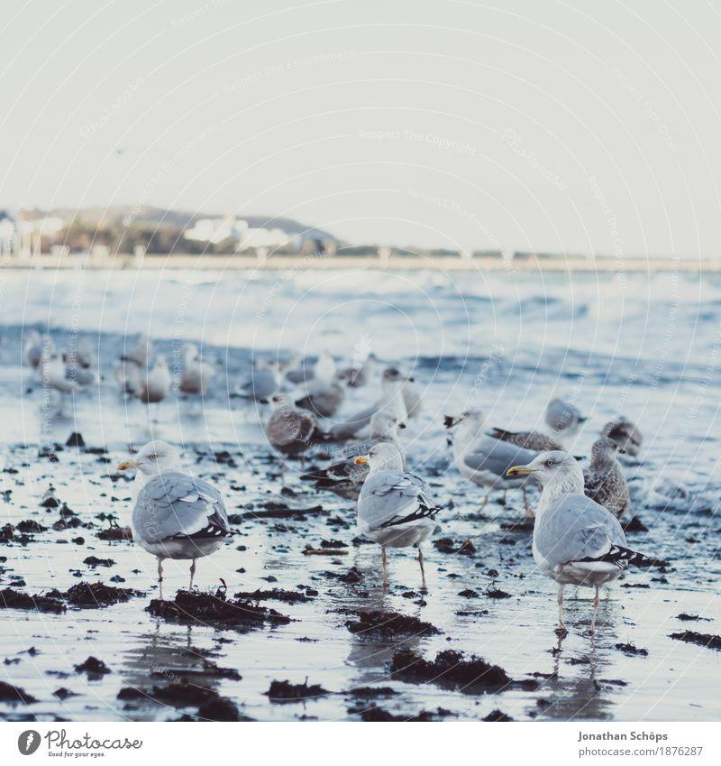 Möwen in Binz VI Ferne Strand Meer Wellen Winter Erfolg Sand Wasser Himmel Ostsee Vogel 3 Tier Tiergruppe Schwarm beobachten kalt blau Möwenvögel Rügen