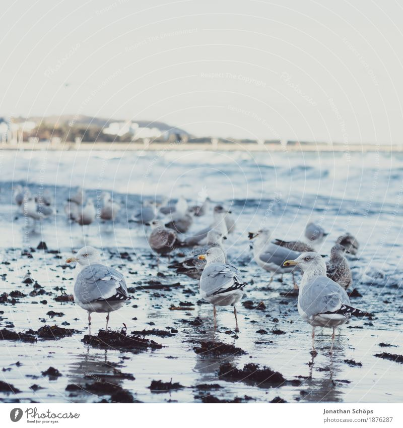 Möwen in Binz VI Himmel blau Wasser Meer Ferne Strand Winter kalt Vogel Sand Wellen Erfolg Aussicht Tiergruppe beobachten Rücken