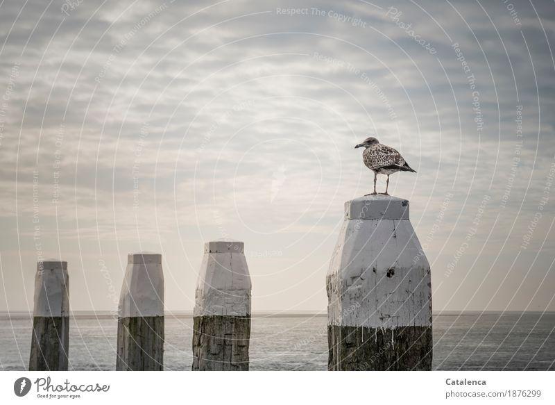 3 x 100 + 3 x 10 + 3 x 1 = Schnapszahl ! Natur Wasser Himmel Wolken Horizont Sommer schlechtes Wetter Küste Nordsee Meer Schifffahrt Jachthafen Wildtier Vogel