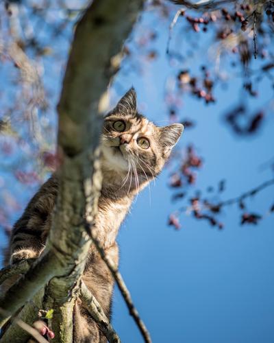 ... und nun? Katze Pflanze blau rot Tier Freude Winter gelb Garten Abenteuer Schönes Wetter beobachten Neugier Klettern sportlich Wolkenloser Himmel