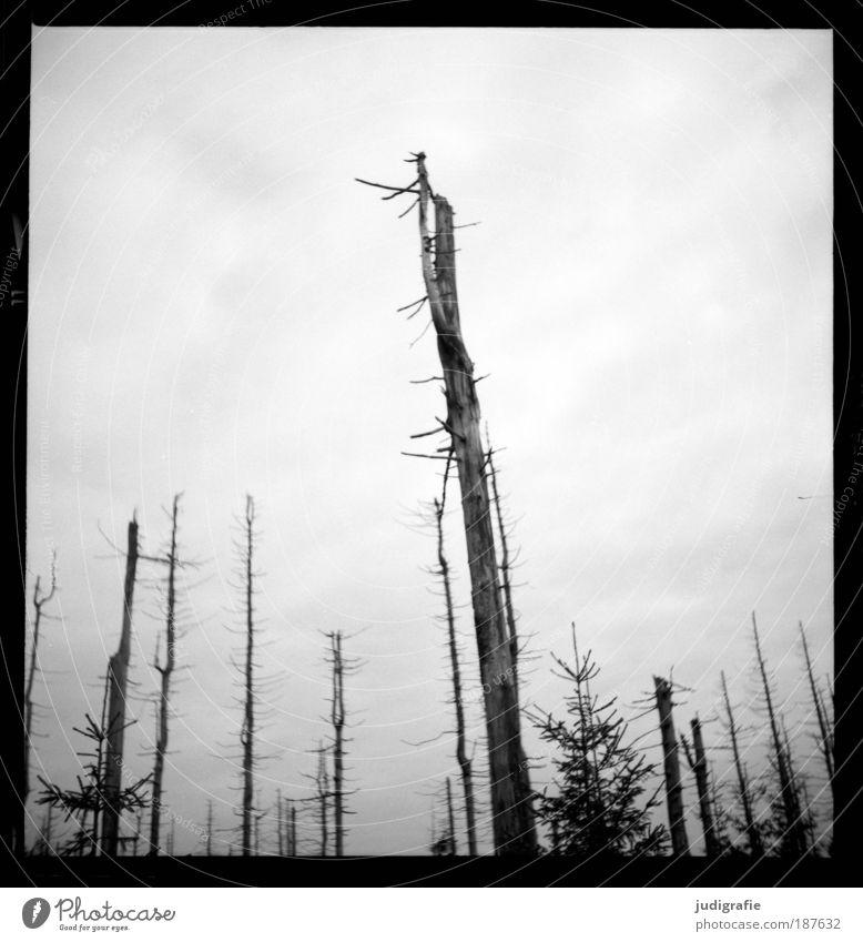 Brocken Natur Baum Pflanze Wald dunkel kalt Tod Berge u. Gebirge Landschaft Umwelt bedrohlich Wandel & Veränderung Klima Vergänglichkeit natürlich gruselig