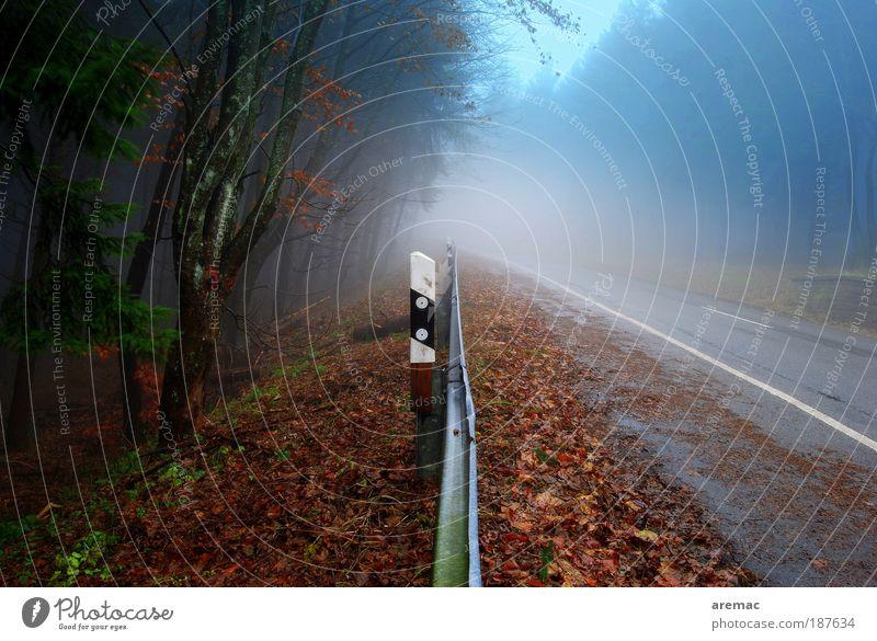 Seitenstreifen Umwelt Landschaft Pflanze Erde Herbst schlechtes Wetter Nebel Regen Wald Verkehr Verkehrswege Straßenverkehr Autofahren Verkehrszeichen