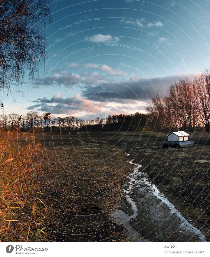 Trockenschwimmer Natur Landschaft Pflanze Urelemente Erde Wasser Himmel Wolken Horizont Herbst Klima Schönes Wetter Baum Sträucher Blatt Wildpflanze Schilfrohr